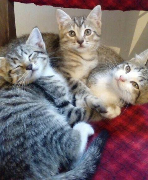 Котята - девочки в дар