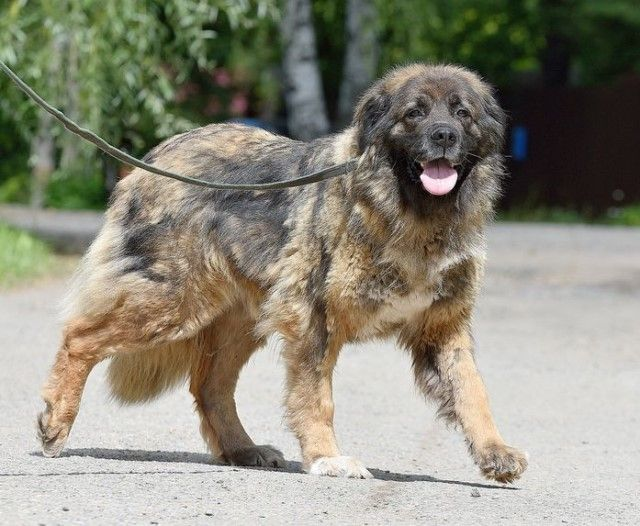 Королева-Бамба. Собака мечты. Самая лучшая девочка в поисках дома