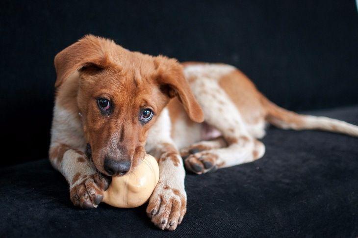 Ищет дом щенок, зацелованный солнцем