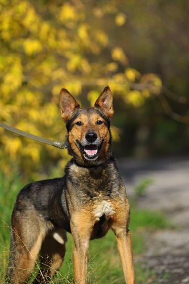 Интеллигентный пёс Чижик ищет любящую семью