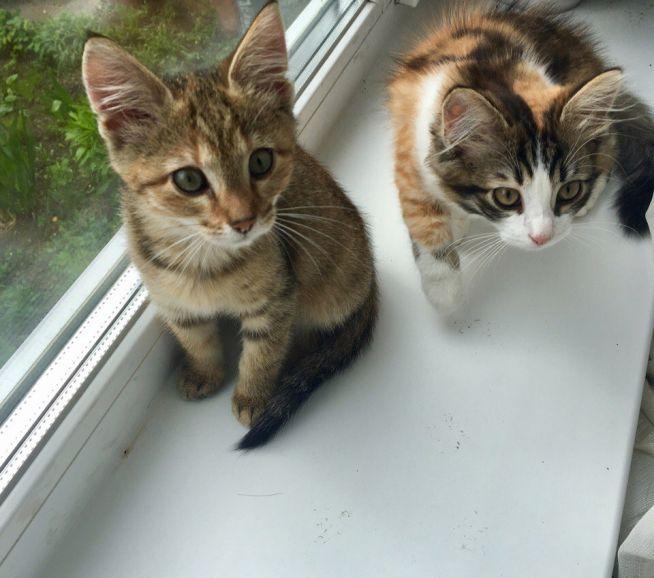 Ищут дом котята Алиса и Мелисса