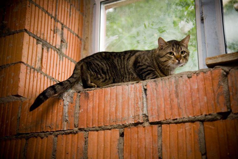 Ласковый кот Гриша нуждается в семье