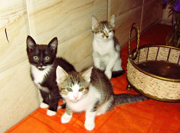 Котята мальчики и девочки в дар, в добрые руки
