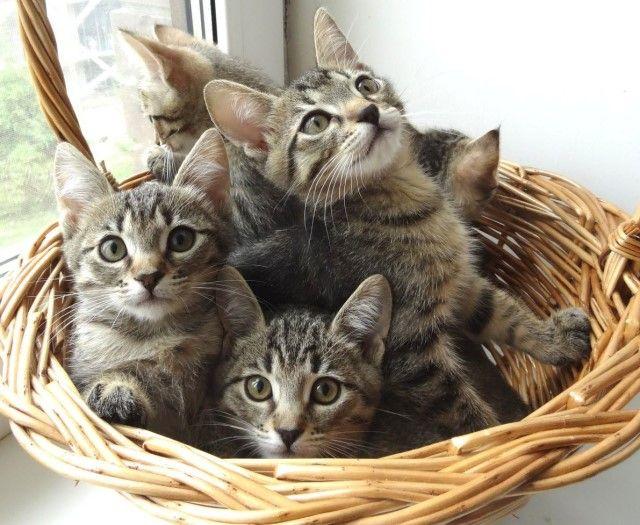 Котята из Храма ищут дом и любящих хозяев