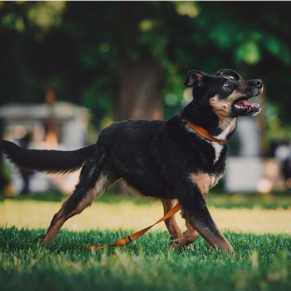 Собака Руна в дар, в добрые руки
