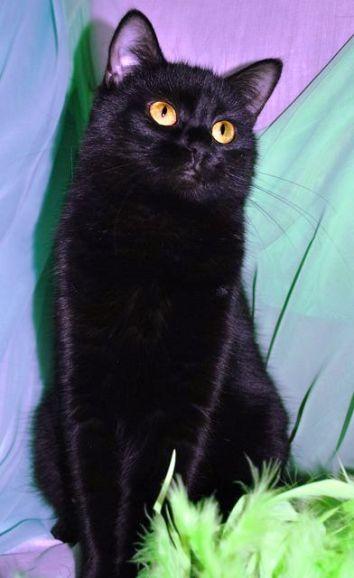 Чёрные коты и кошки в добрые руки