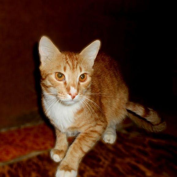Рыжий кот в добрые руки