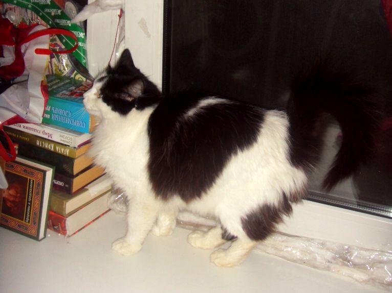 Принцесса - чудо кошка в добрые руки