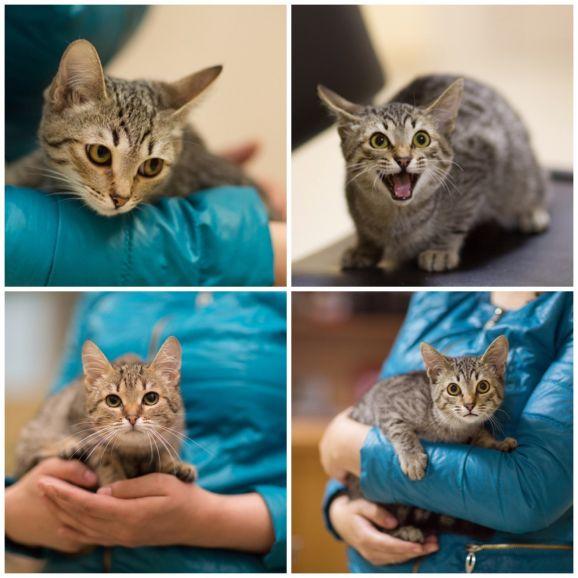Очаровательные котята шпротики ищут дом