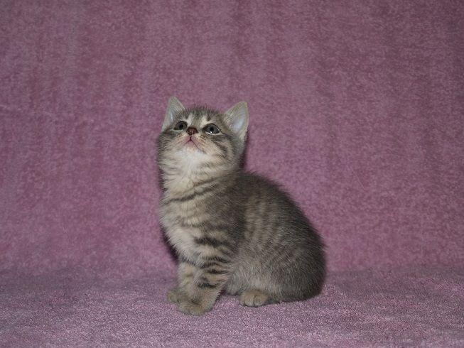Ищут дом замечательные котята