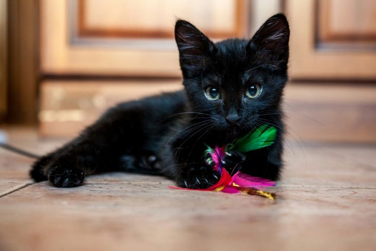 Чёрный котёнок Брауни ищет дом