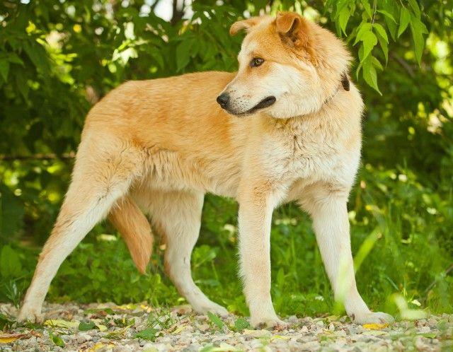 Счастливчик Синдбад. Молодой пёс в поисках дома