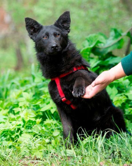 Собака Макса в дар, в добрые руки