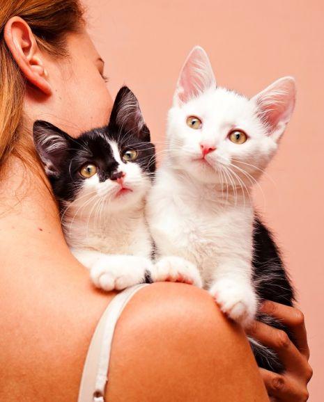 Котята Кай и Герда в дар, в добрые руки