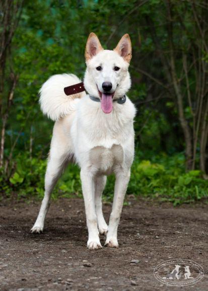 Белый пёс Джек в добрые руки