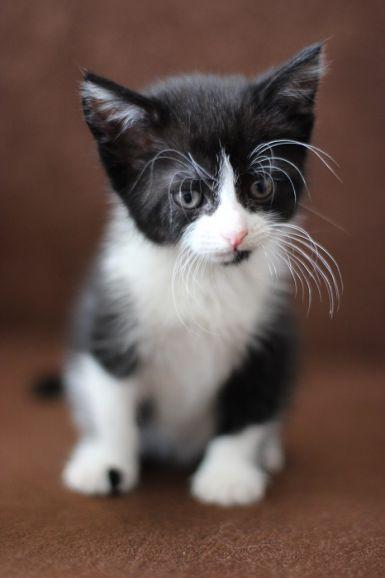Котята-крохи ищут дом, в дар