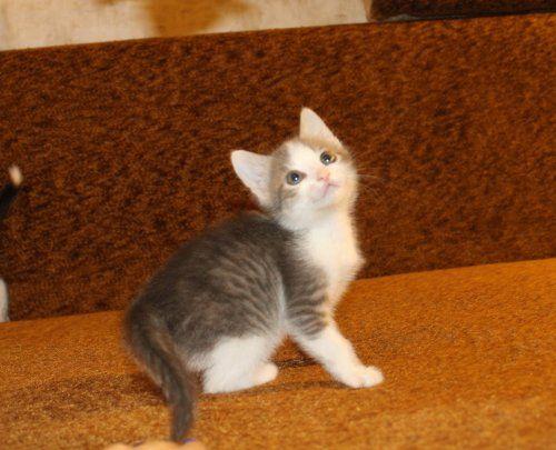 Котик - мурчалка в дар
