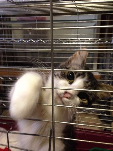 Кошечка Оливка, дружелюбная ласкушка