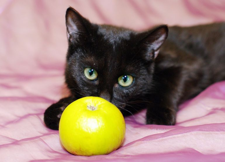 Котенок Муркиса, стройняшка в чёрной шубке