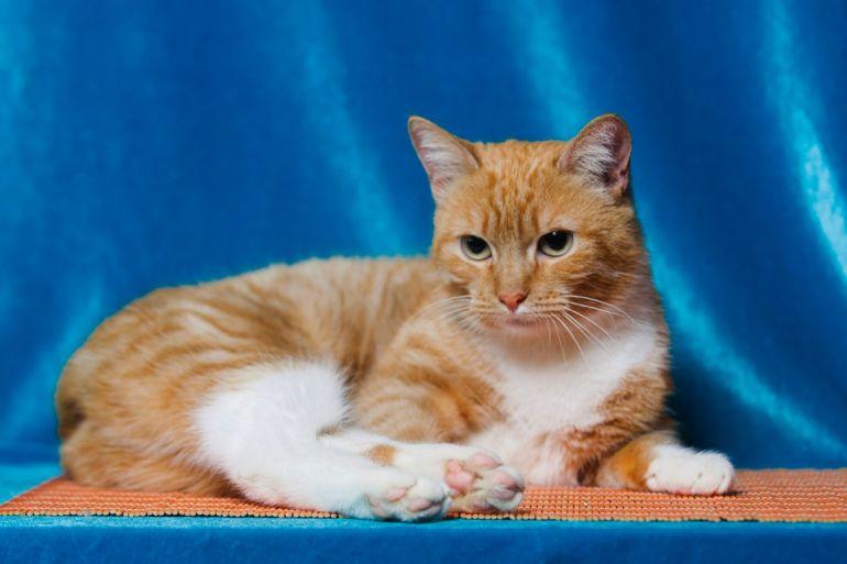 Яркая кошка Лиса ищет дом