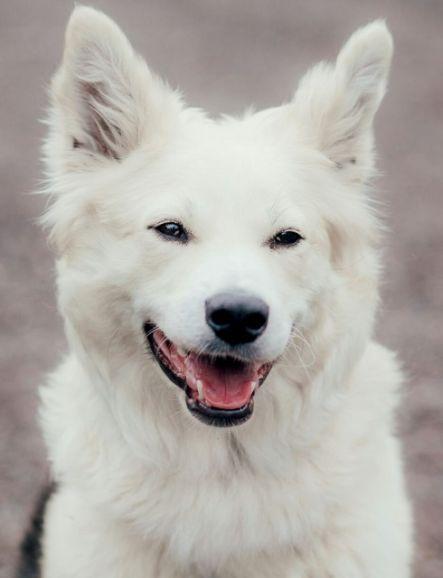 Чудо природы по имени Мэри. Собака-друг, собака-нянька, идеальный питомец в дар