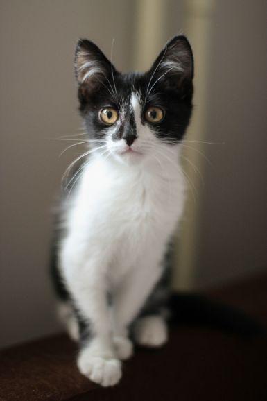 Удивительные котята ищут дом