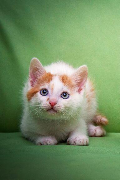 Славный, яркий котёнок Шум ищет свою семью