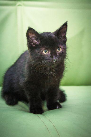 Чудесный котёнок-уголёк Блэк ищет свою семью