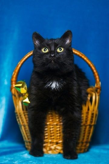 Кошка Клякса ищет хозяев