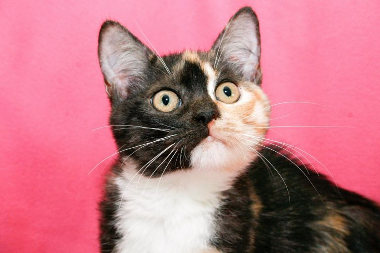Очаровашка котёнок Мармеладка в добрые руки
