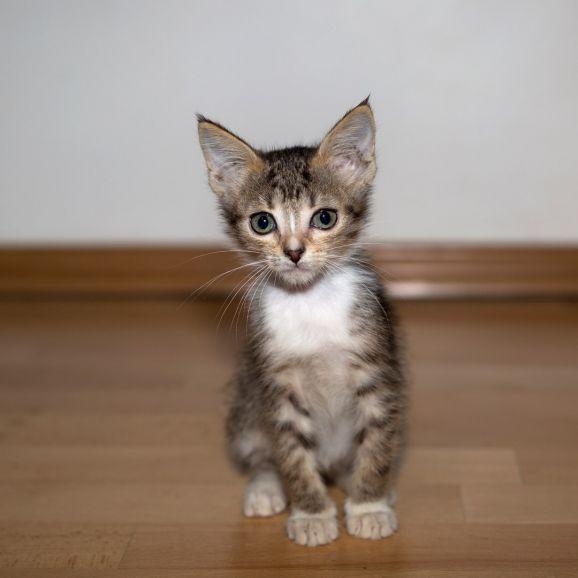 Котёнок Сонечка в поисках дома
