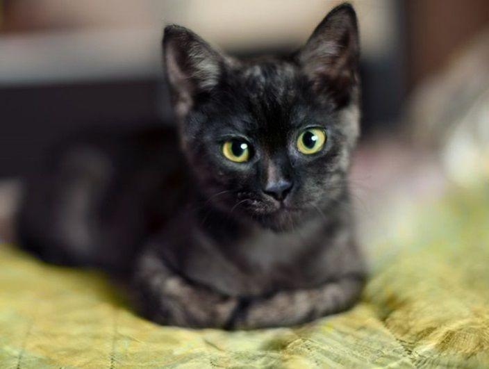 Два котёнка мальчика окраса чёрный дым ищут дом