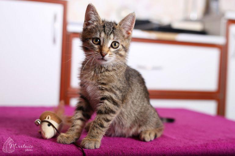 Котёнок-мурлыка в поисках дома