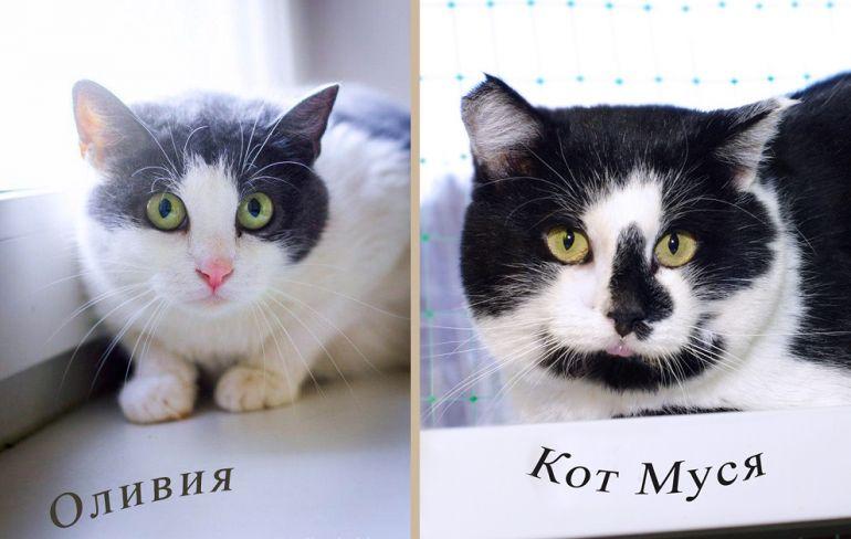 Никому не нужные кошки со сложным характером. Шанс найти дом