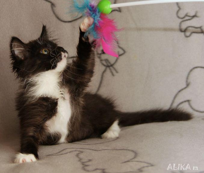 Потрясающий котёнок Марик ищет хозяев