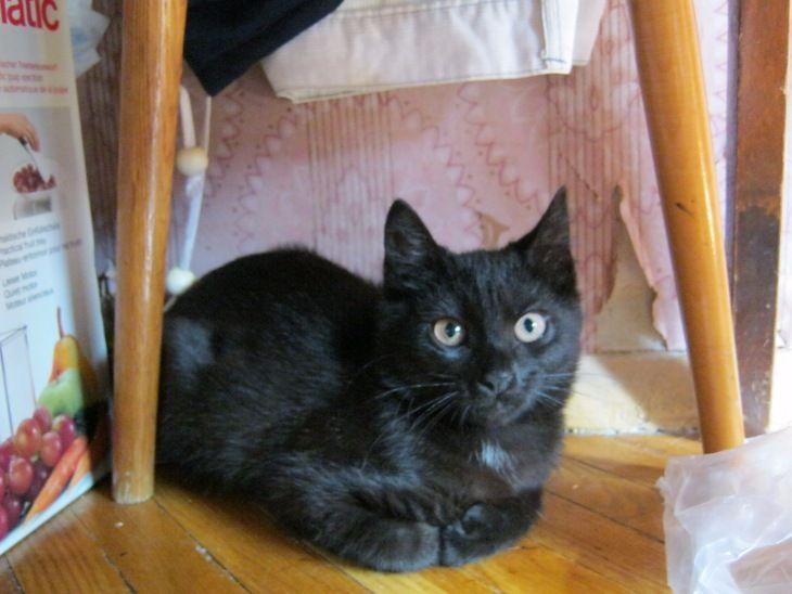 Котёнок девочка ищет дом