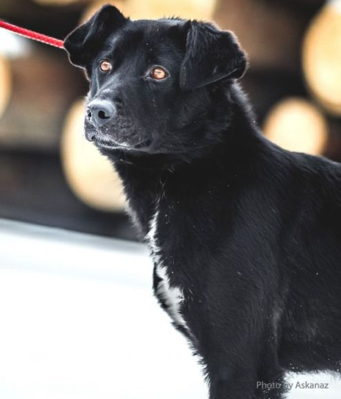 Лучший друг по имени Бруно. Молодой пёс в дар