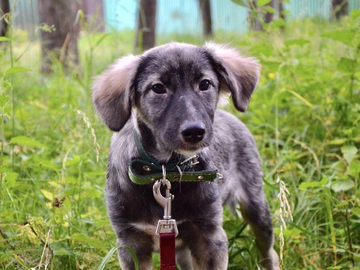 Милый щенок Киви в добрые руки