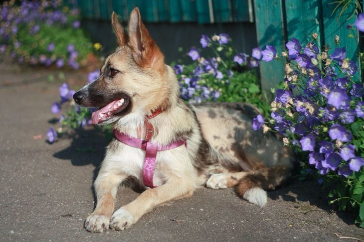 Собака Юта ищет дом