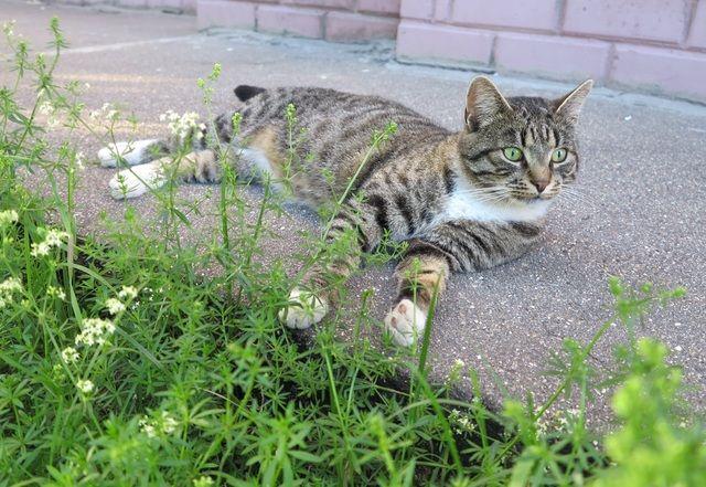 Кастрированный кот хочет домой