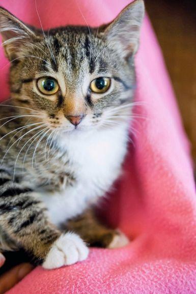 Котёнок Муза обаятельная девочка ищет дом