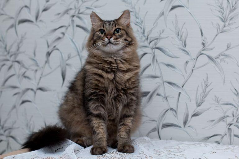 Котик Степан в добрые руки