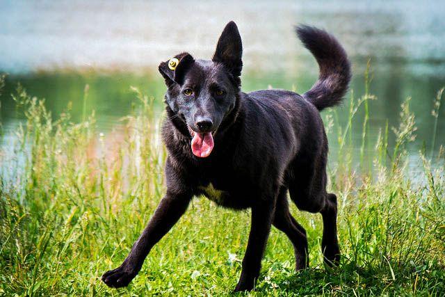Добрый и ласковый пёс Джек