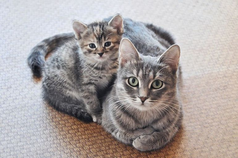 Обычная серая кошка Марфушка