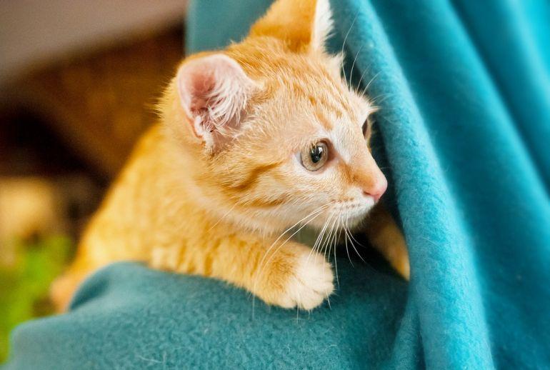 Рыжие котята Ларсон и Империя солнечные девочки в дар