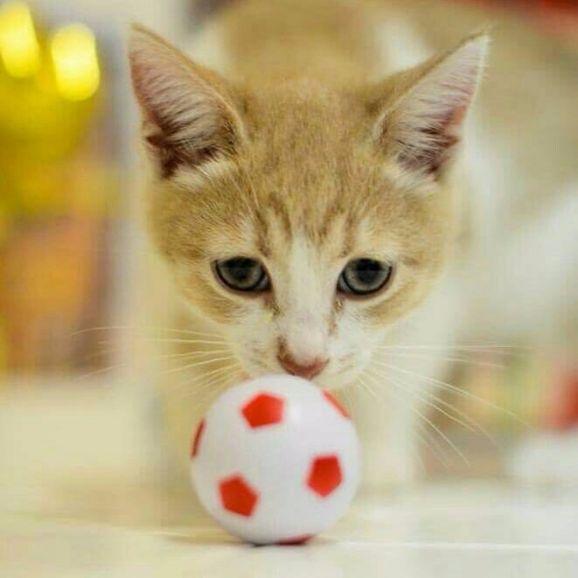 Отдаётся котёнок в добрые руки
