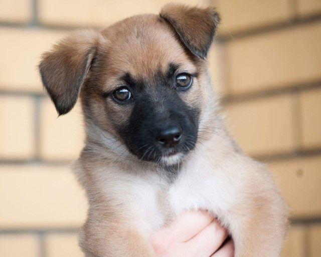 Очаровашка Кнопочка, очень красивый щенок в дар