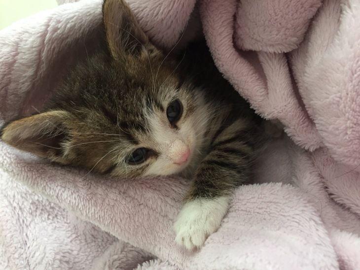 Котята Рони и Бони ищут любящую семью