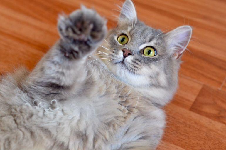 Котик Барашек в добрые руки