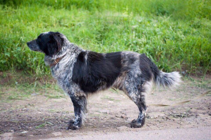 Пёс Патрон ищет семью